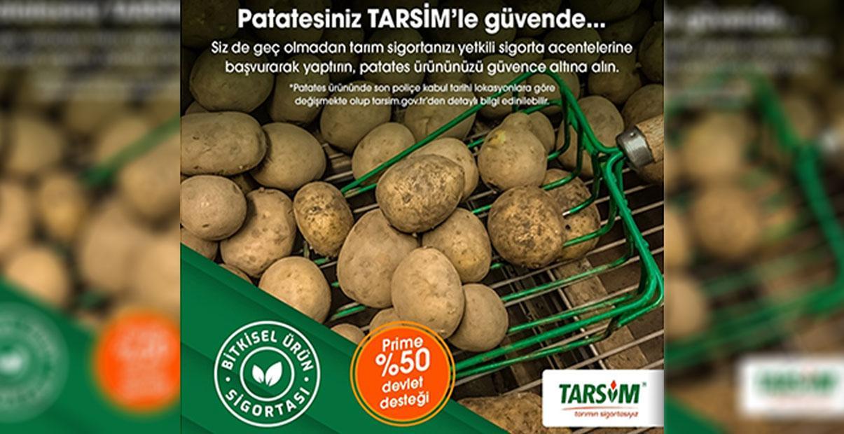 "TARSİM: ""Patates ürününüz güvende"""