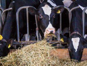 vitamin ve mineral eksikliğinin hayvan performansı üzerindeki etkisi nedir?