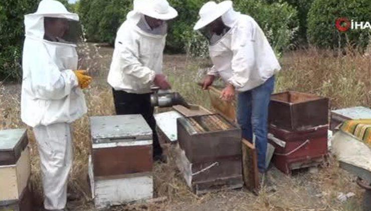 ilk bal hasadını yapan arıcılardan, aracı tepkisi