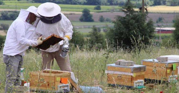 hem arılarını hem de heveslerini çaldılar