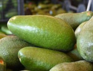 avokadoya talep arttı, ekim alanları genişletildi
