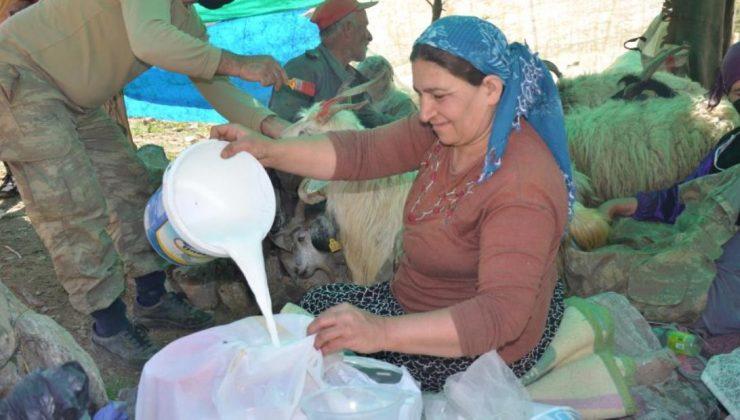 berivanlar, şırnak yaylalarında süt sağımına başladı