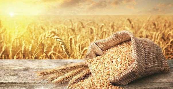 tmo buğday ve arpa satış fiyatlarını açıkladı