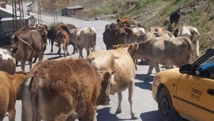başıboş bırakılan hayvanların sahiplerine idari ceza