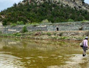 köylerde çeltik ekimine başlandı