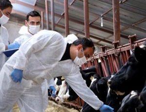 korona virüs hayvanlarda da tespit edilmişti, yetkili isim açıklama yaptı