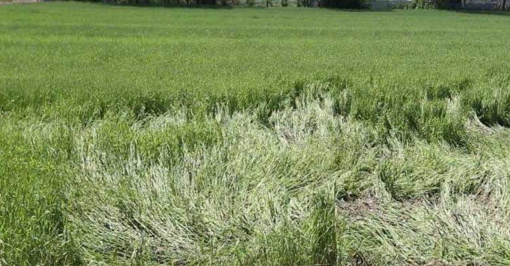 dolu yağışından zarar gören çiftçilerin zararları karşılanacak