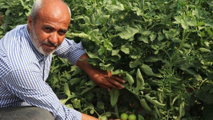 domates ihtiyacının yüzde 15'ini karşılıyor