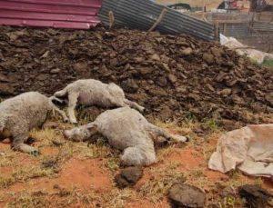 fırtına çatıları uçurdu, hayvanları telef etti