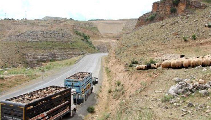 göçerlerin zorlu yolculuğunu 'kırkayaklar' sona erdirdi