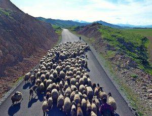 göçerlerin renkli yolculuğu