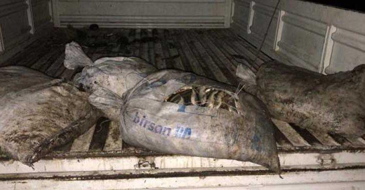 van'da 2,5 ton kaçak avlanmış inci kefali ele geçirildi, 29 bin tl ceza kesildi