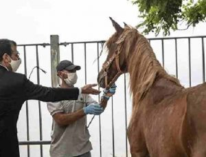 ibb'den kayıp olduğu iddia edilen atlarla ilgili açıklama