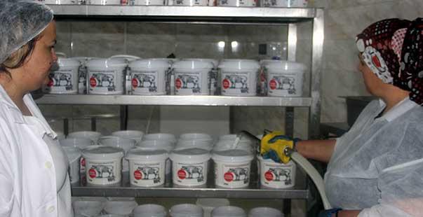 2 kadın günde 1 ton manda yoğurdu işliyor