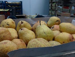 Tonlarca meyve soğuk hava depolarında kaldı