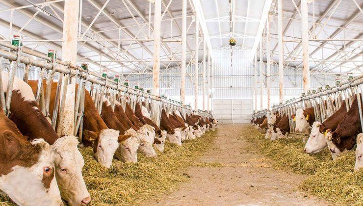 sütün fiyatı kalitesine göre değişecek