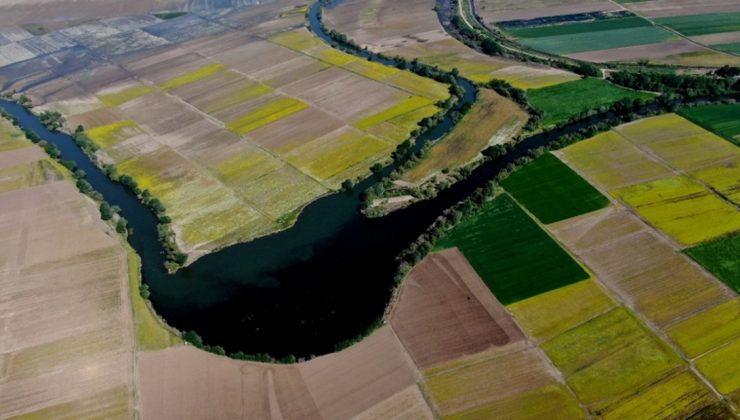 hasat öncesi tarlalar halı desenlerini aratmadı