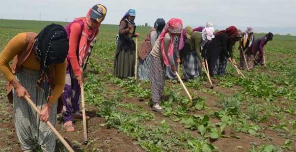 mevsimlik tarım işçilerinin zorlu mesaisi başladı