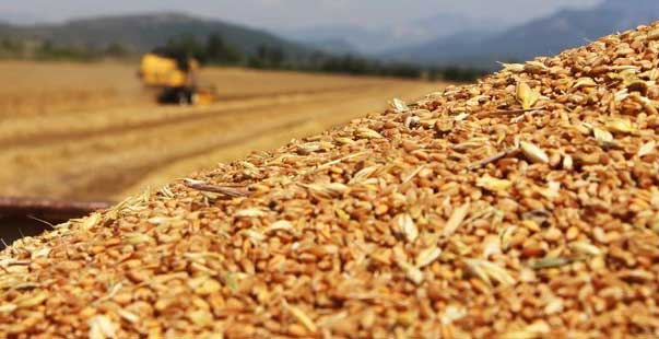 TMO, buğday ve arpa ithalatı için düğmeye bastı