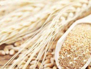 Türkiye'nin ilk tescilli siyez buğdayları üretilecek