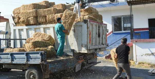 hasat edilen 30 ton buğday ve saman üreticilere ücretsiz dağıtıldı