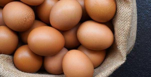 damizlik yumurta4 1