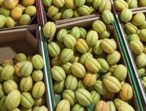 ab tescilli yaş kayısı sezonun en pahalı meyvesi oldu