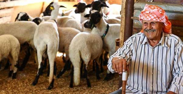 ömrünün 77 yılını sakız koyununa adadı