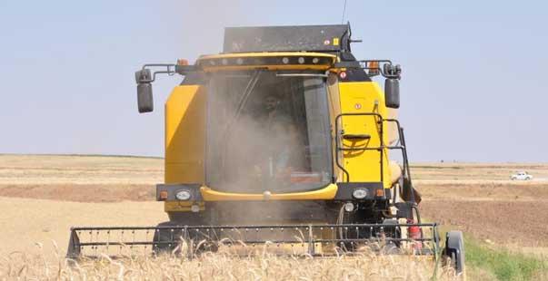 sulu buğdayda verim artışı çiftçiyi sevindirdi