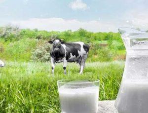 süt üreticilerine yeni destekleme modeli