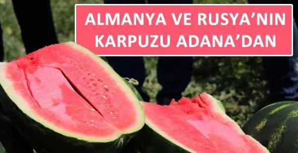 Almanya ve Rusya'nın karpuzu Adana'dan
