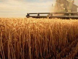 Artan sıcaklıklar buğday fiyatlarını 4 yılın zirvesine çıkardı