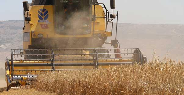 eskişehir'de başlayan buğday hasadı beklentiyi karşılamadı