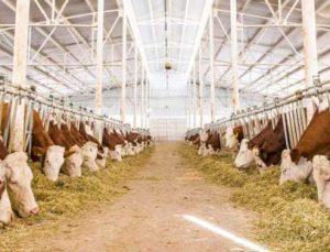 hayvancılık işletmelerine yüzde 50 hibe desteği