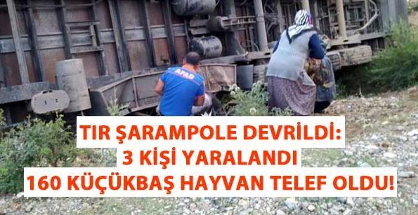 Tır şarampole devrildi: 3 kişi yaralandı, 160 küçükbaş hayvan telef oldu