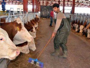 hayvancılık yatırım desteği başvuruları başladı
