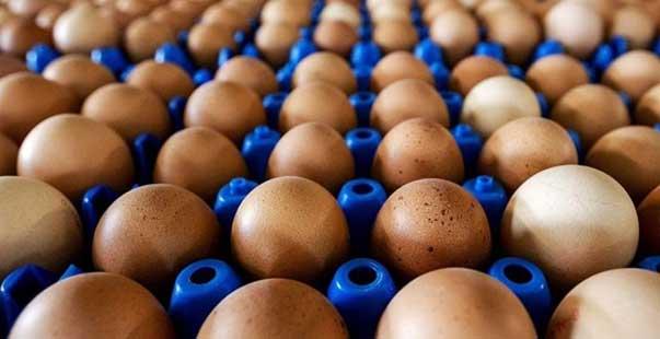 yumurta üreten sayısı azalıyor