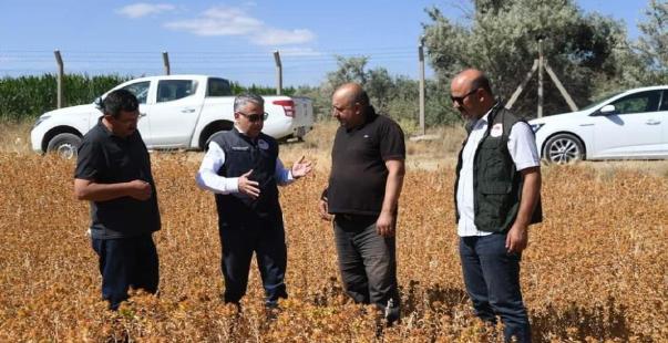 doğal şifa kaynağı olan aspir'in hasadı yaklaşıyor