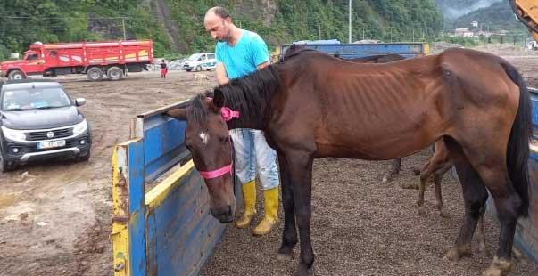 tırın dorsesinde ölüme terk edilen atlar   yediemin olarak çiftliğe gönderildi