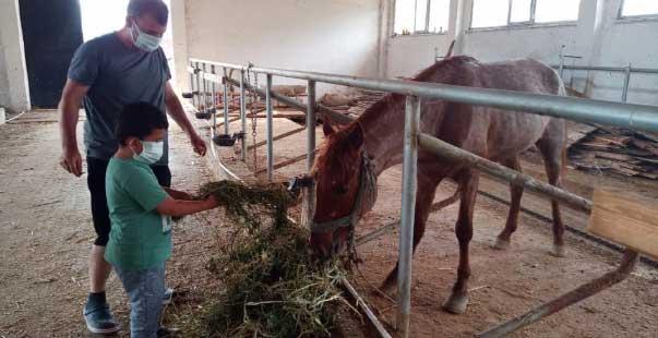 ölüme terk edilen atlar yeni yuvalarında