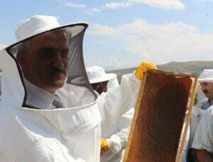 erzincan'da bal hasadı başladı