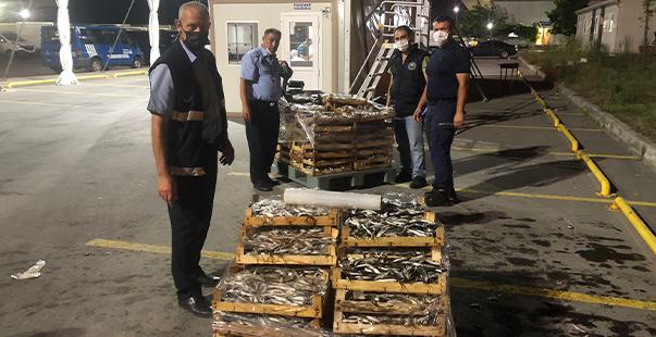 boy yasağına aykırı avlanılan 1.5 ton istavrit balığına el konuldu