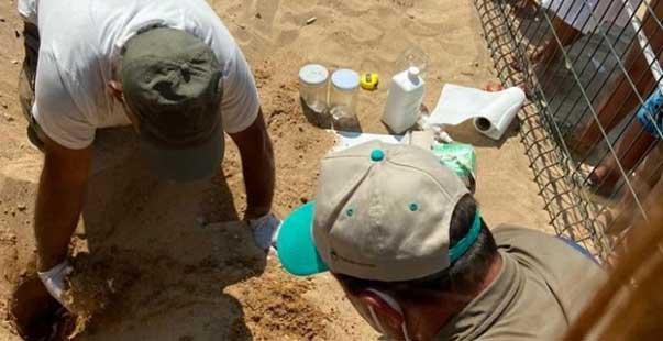 didim'i tercih eden caretta carettaların yavruları denizle buluştu