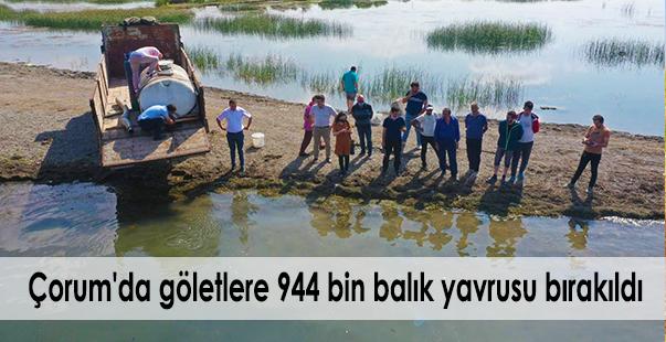 çorum'da göletlere 944 bin balık yavrusu bırakıldı