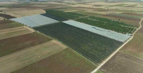 devletin hibe sağladığı elma ve armut bahçesine drone ile denetim