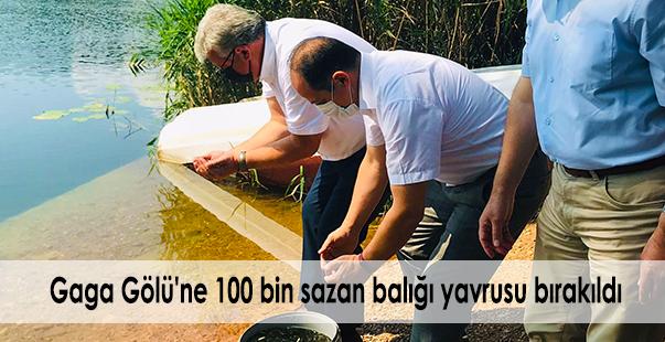 gaga gölü'ne 100 bin sazan balığı yavrusu bırakıldı