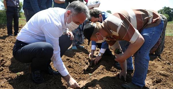 inegöl'de ekinezya hasadı başlıyor