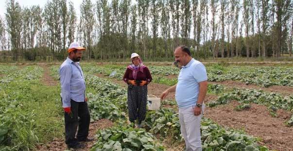 iğdır il tarım müdürü yolcu, tarlada çalışan çiftçileri dinledi