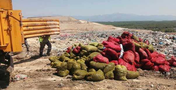 4 ton kaçak midye ele geçirildi
