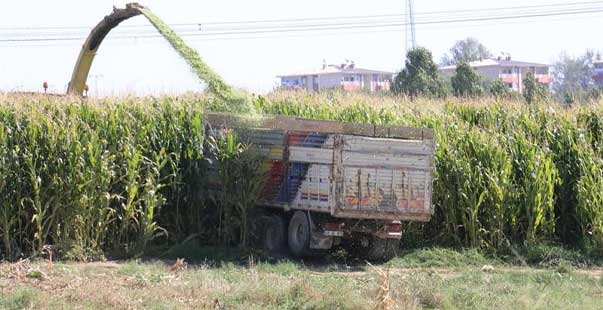 silajlık mısırı en çok üreten şehirler arasında yer alıyor